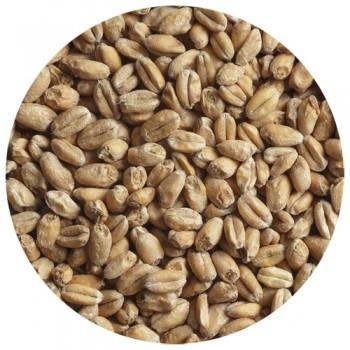 Солод пшеничный WHEAT LIGHT (Пшеничный Светлый), 1 кг